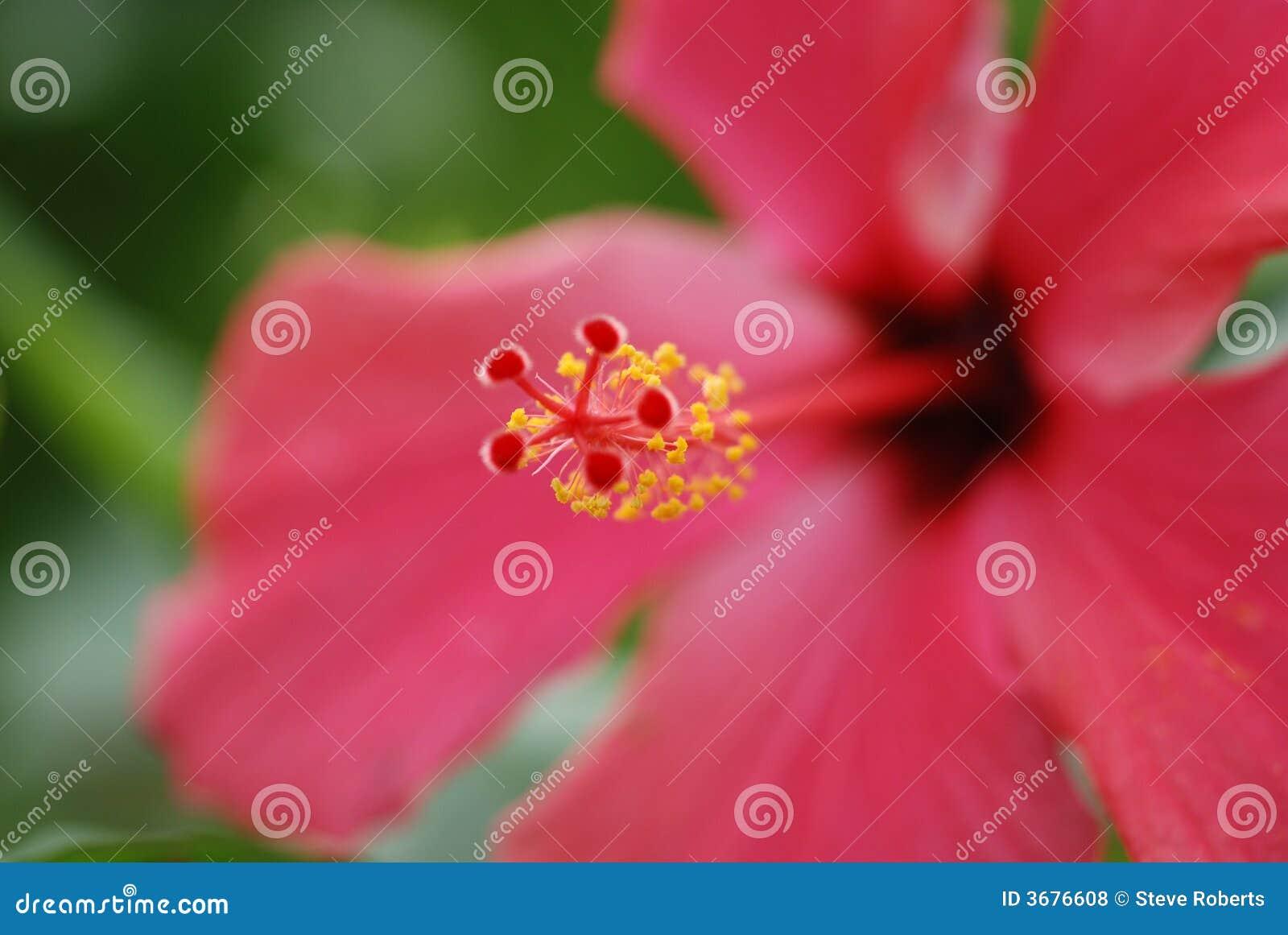 Download Fiore a macroistruzione fotografia stock. Immagine di petali - 3676608