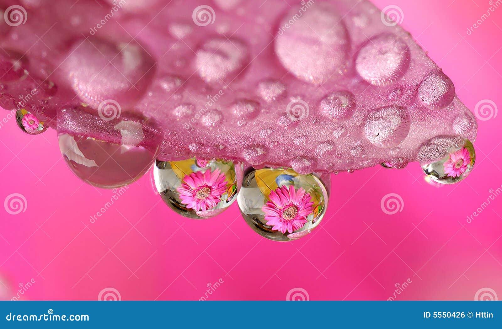 Fiore a macroistruzione di goccia dell acqua