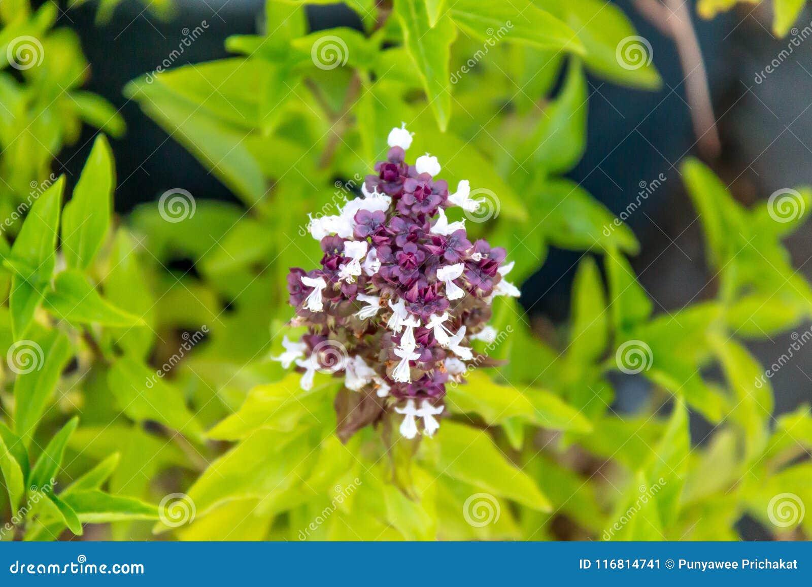 Fiore medio con verde