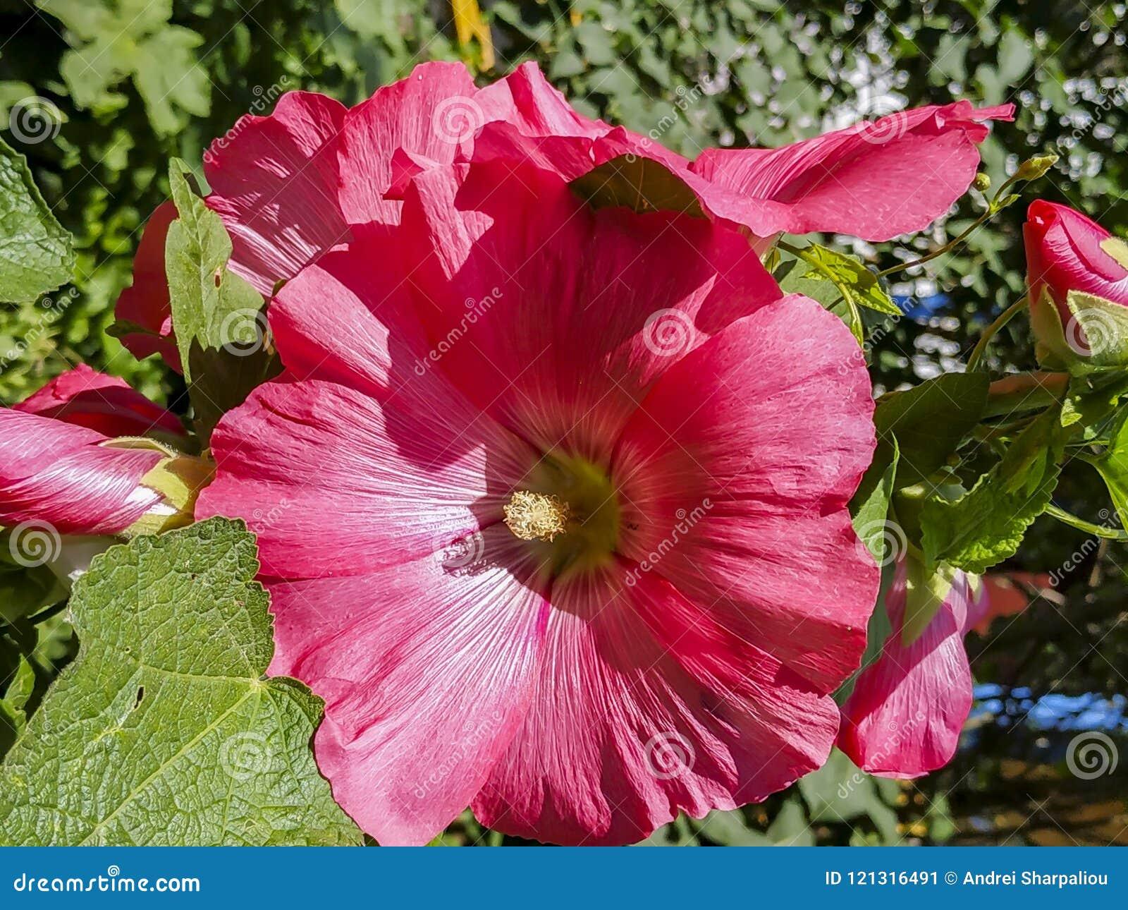 Fiore nell immagine di sfondo del giardino