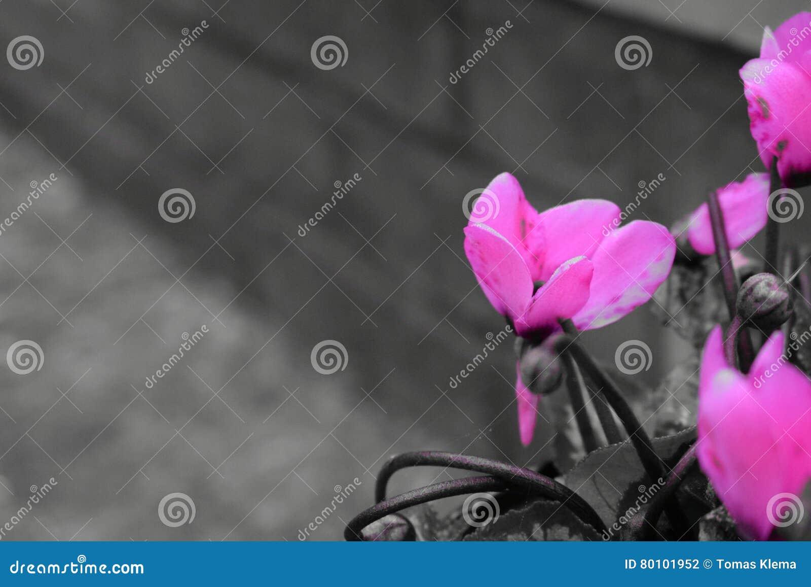 Fiore rosa con il fondo del mattone