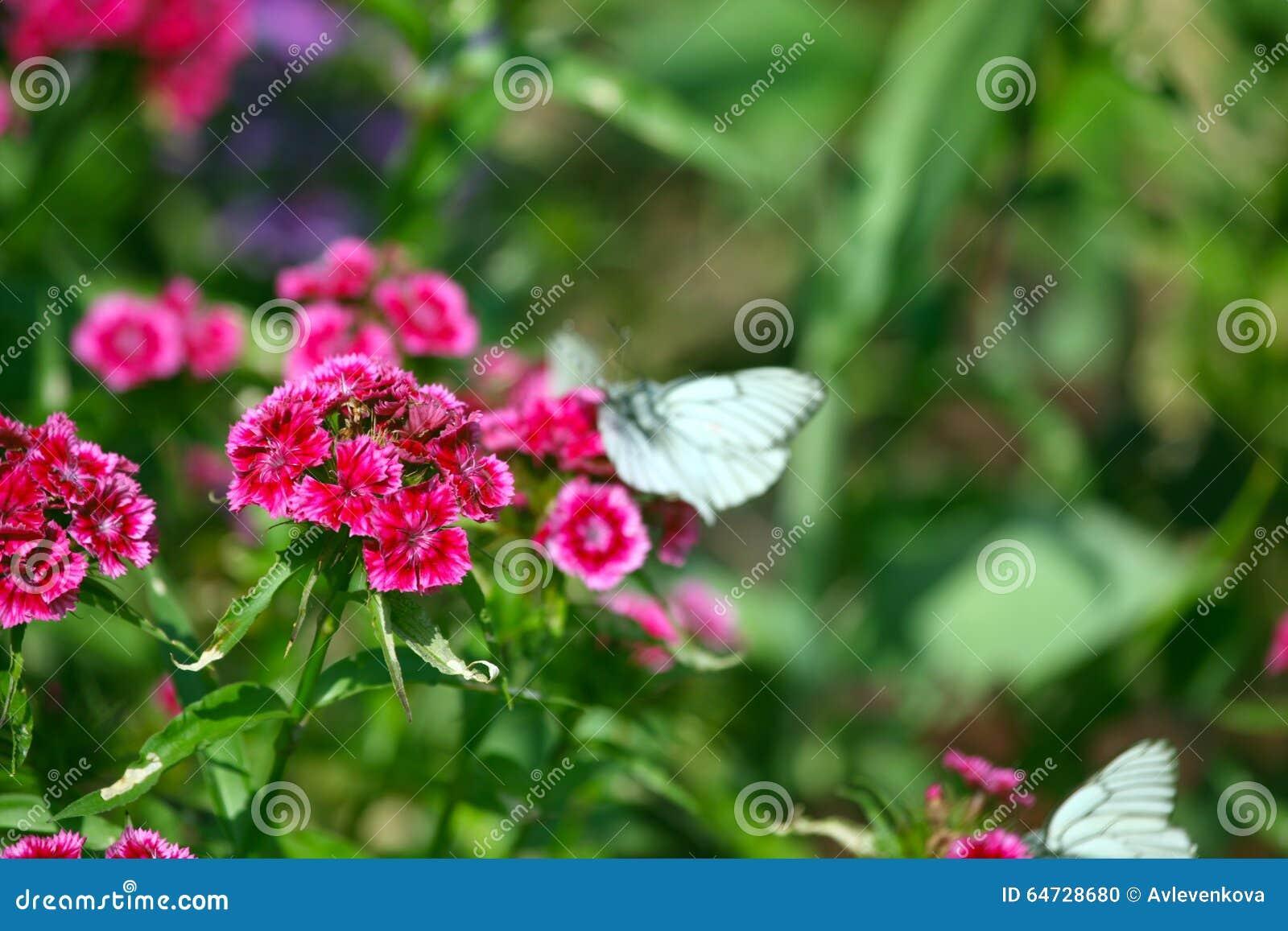 Fiore rosa con la farfalla