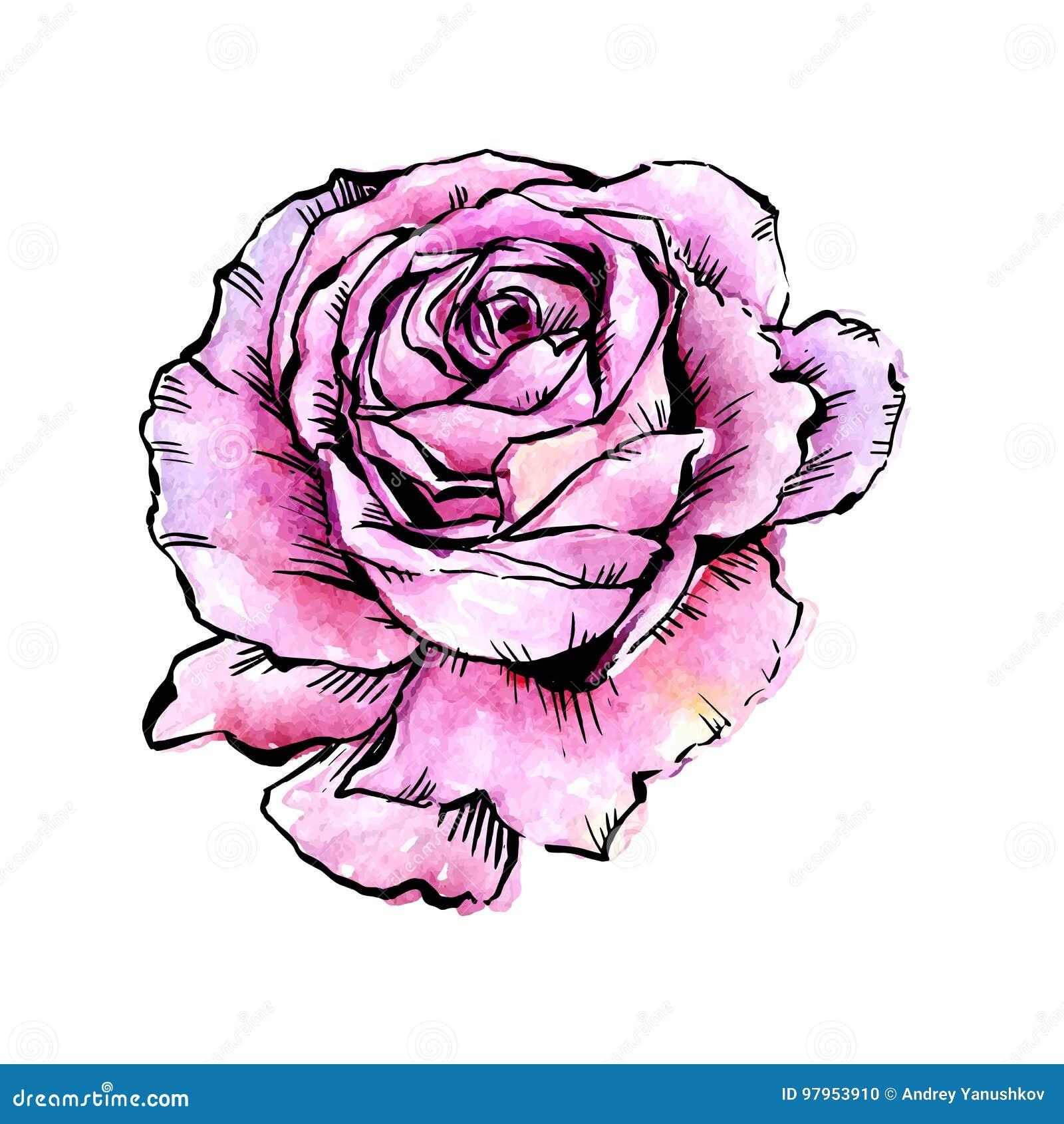 Fiore rosa di vettore del Wildflower in uno stile dell acquerello isolato