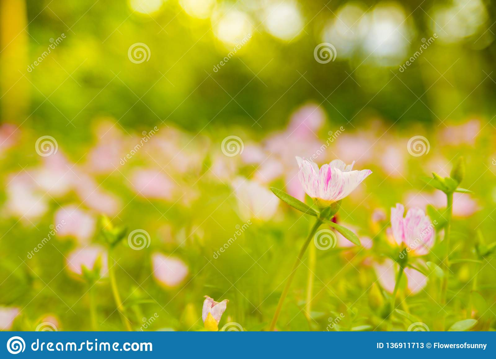 Fiore rosa variopinto in bello giardino