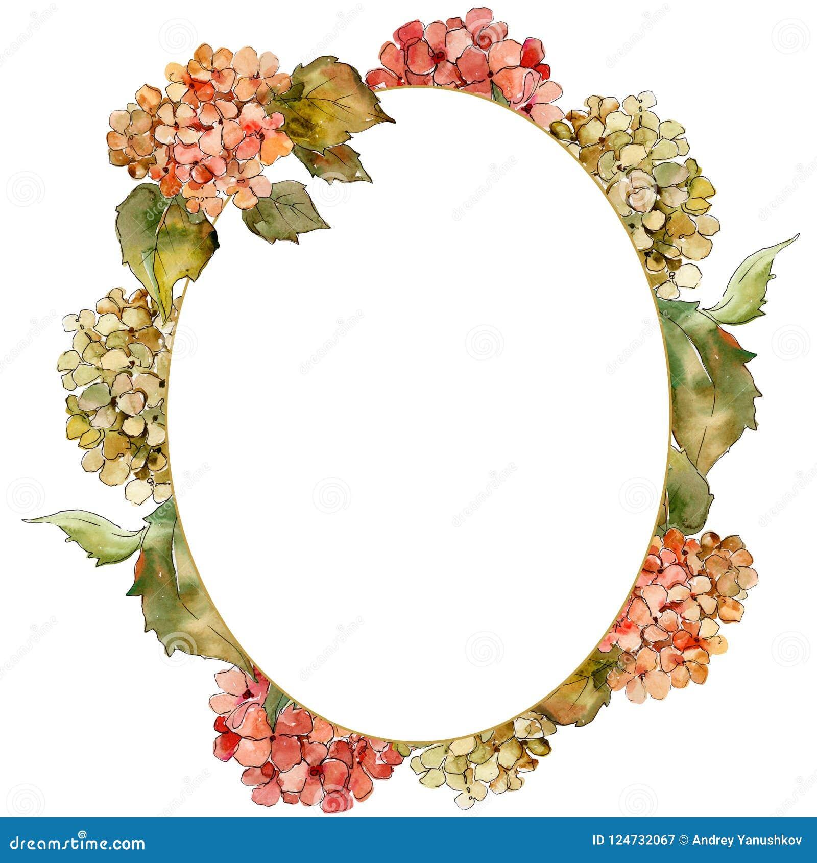 Fiore rosso e giallo dell acquerello di gortenzia Fiore botanico floreale Quadrato dell ornamento del confine della pagina