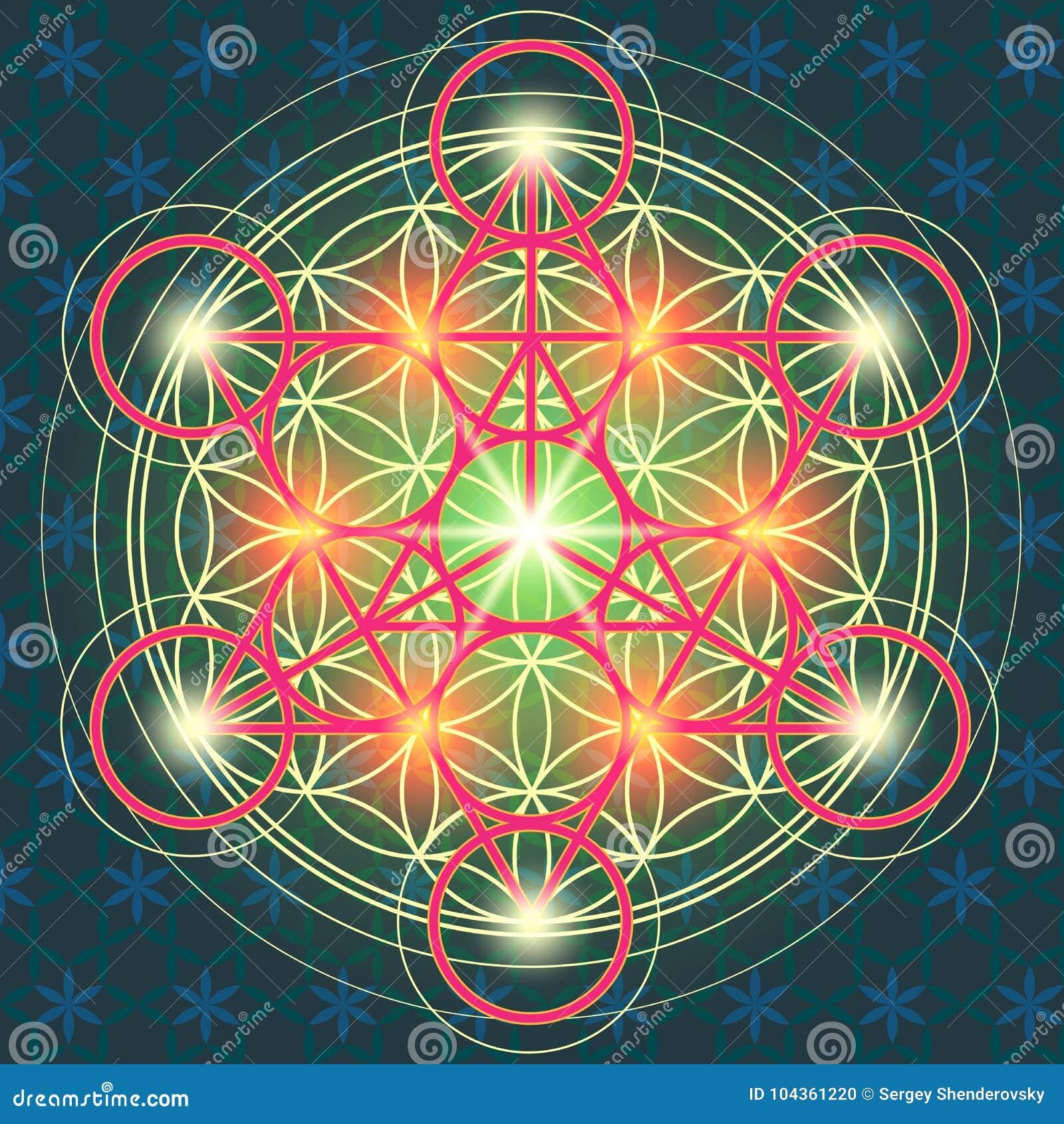 Fiore sacro IV della geometria