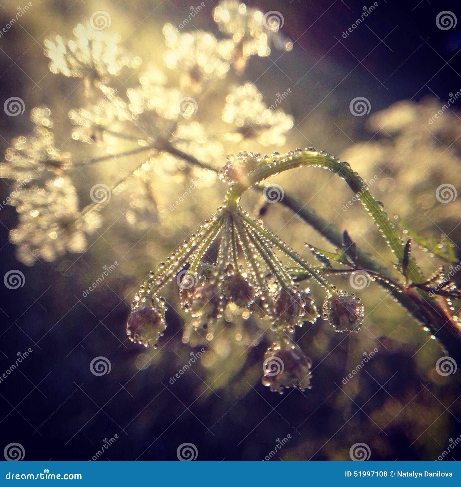 Fiore selvaggio nelle gocce di rugiada su una mattina soleggiata