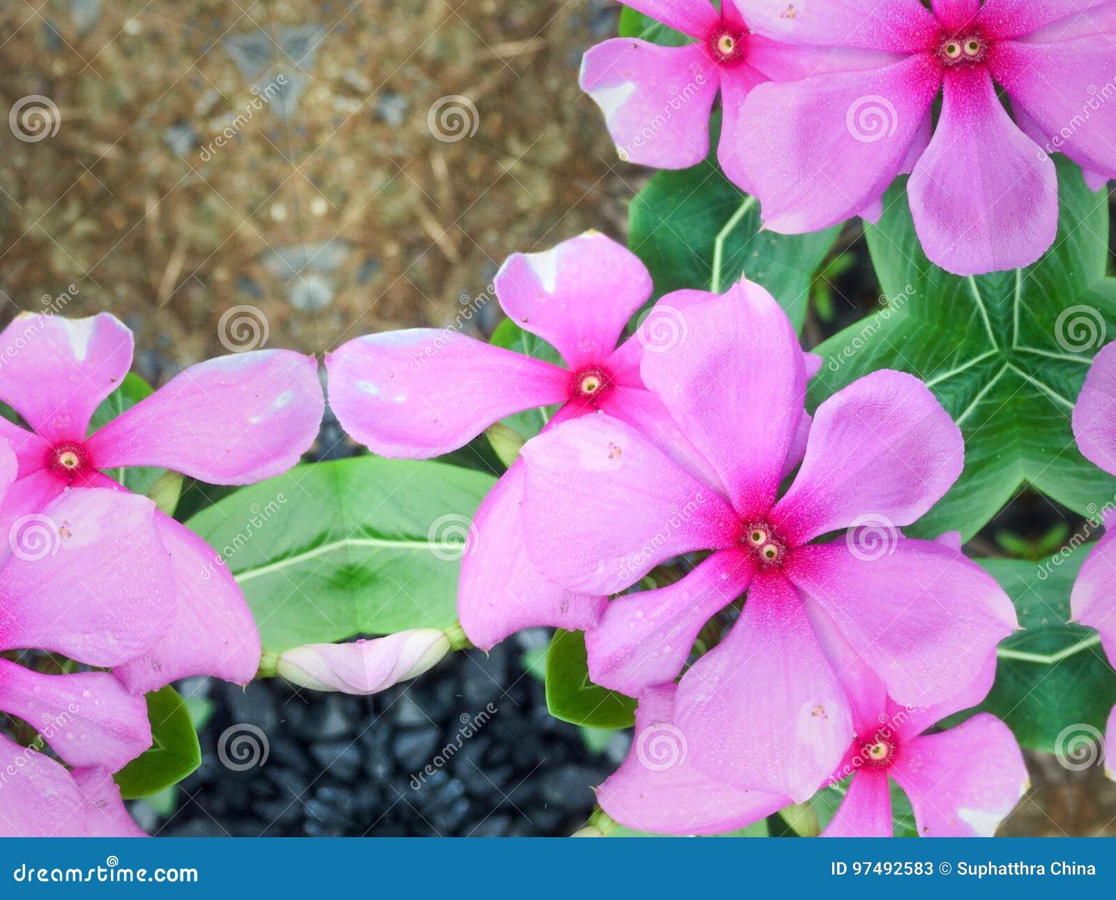 Fiore tropicale dentellare