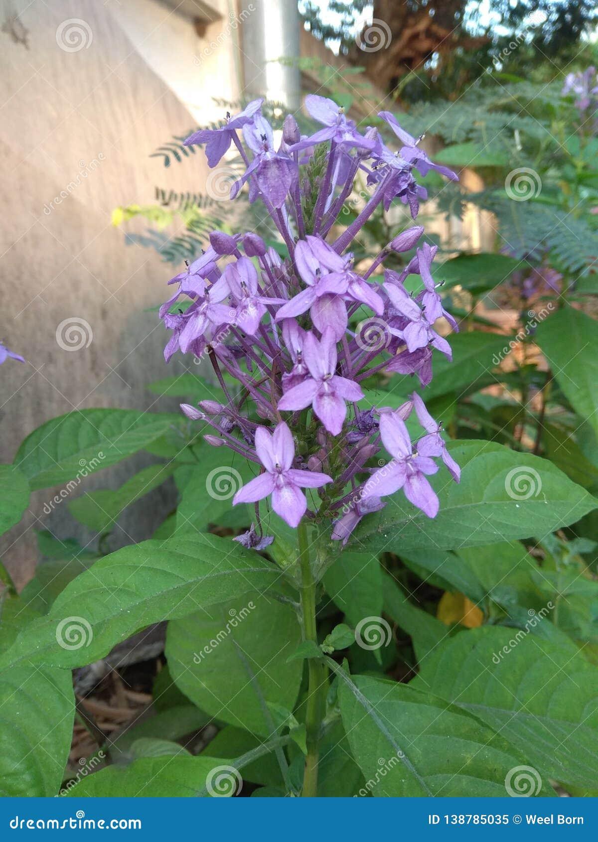 Fiore viola accanto alla parete