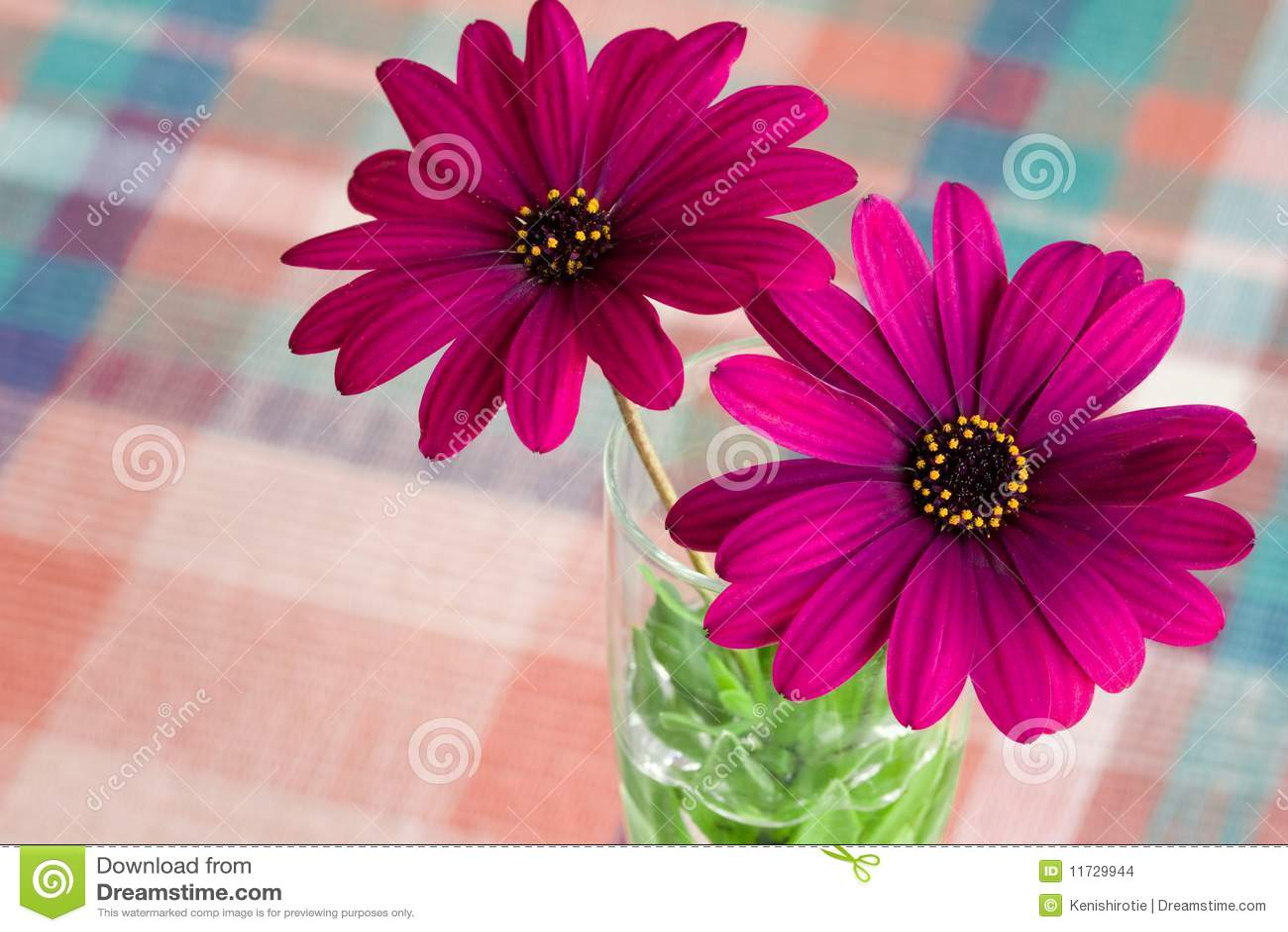 Fiore viola della margherita