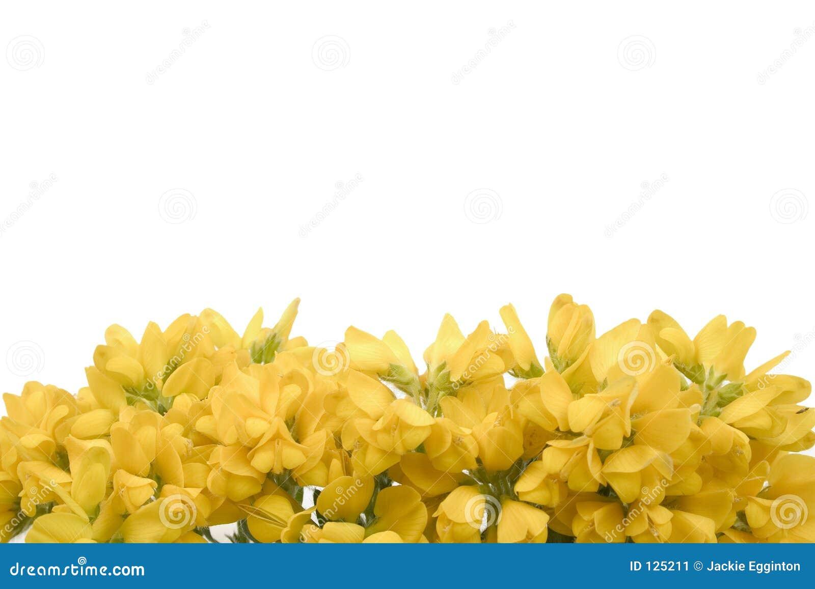 Fiori 2 di colore giallo