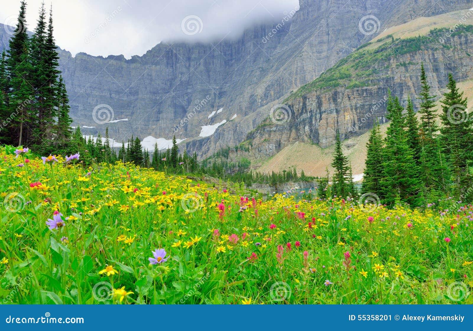 Fiori alpini selvaggi sul paesaggio del Glacier National Park