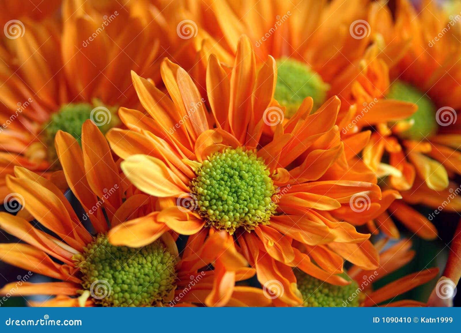 Fiori Arancioni.Fiori Arancioni Fotografia Stock Immagine Di Regali Bello 1090410