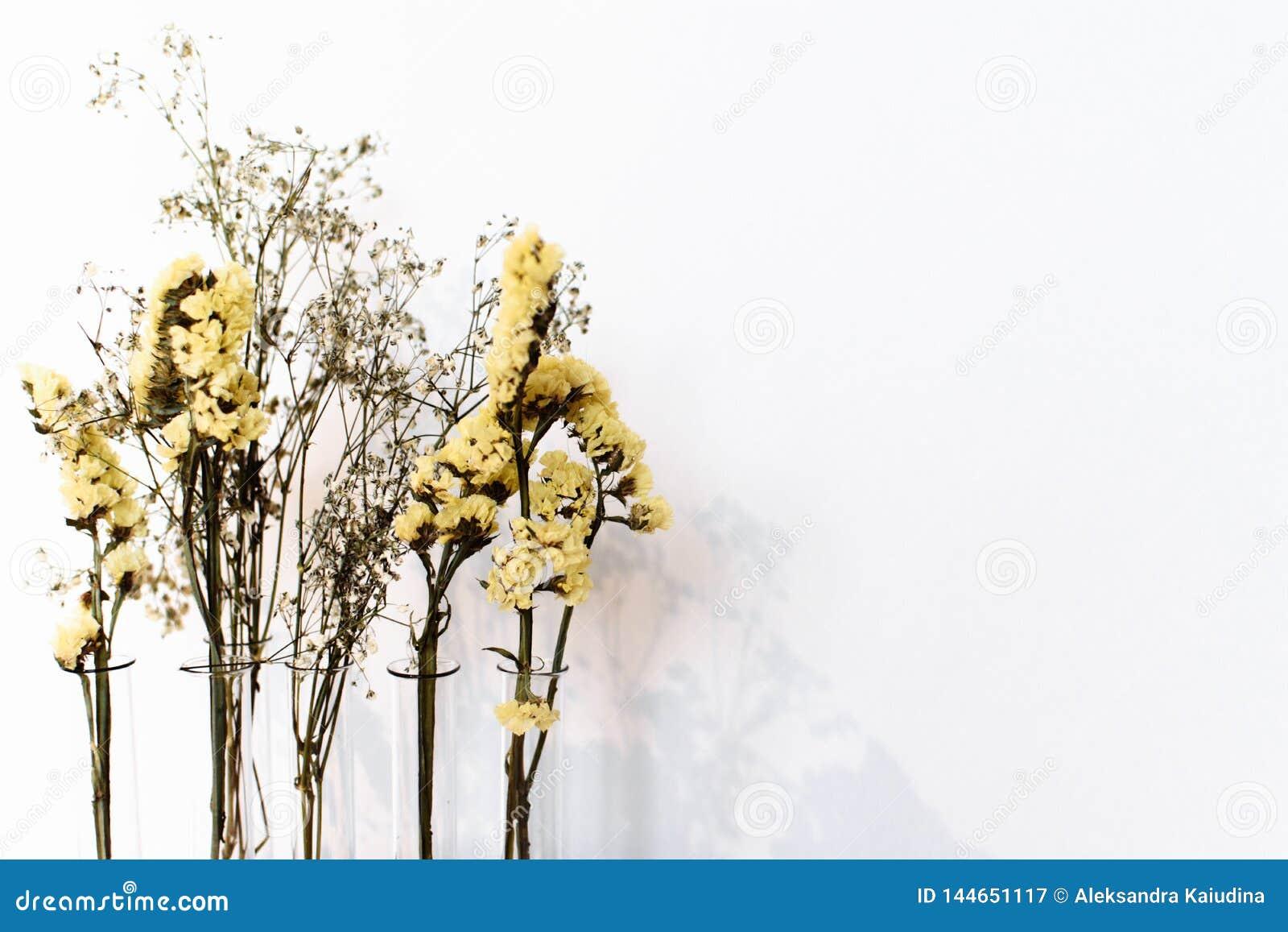 Fiori asciutti gialli su un fondo bianco