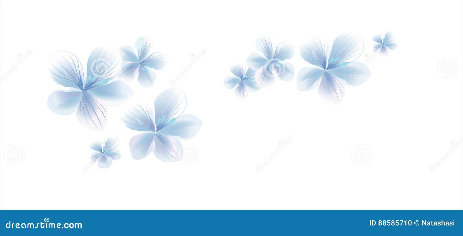 Fiori Bianchi Volanti.Fiori Bianchi Blu Chiaro Volanti Su Fondo Bianco Fiori Dell Apple