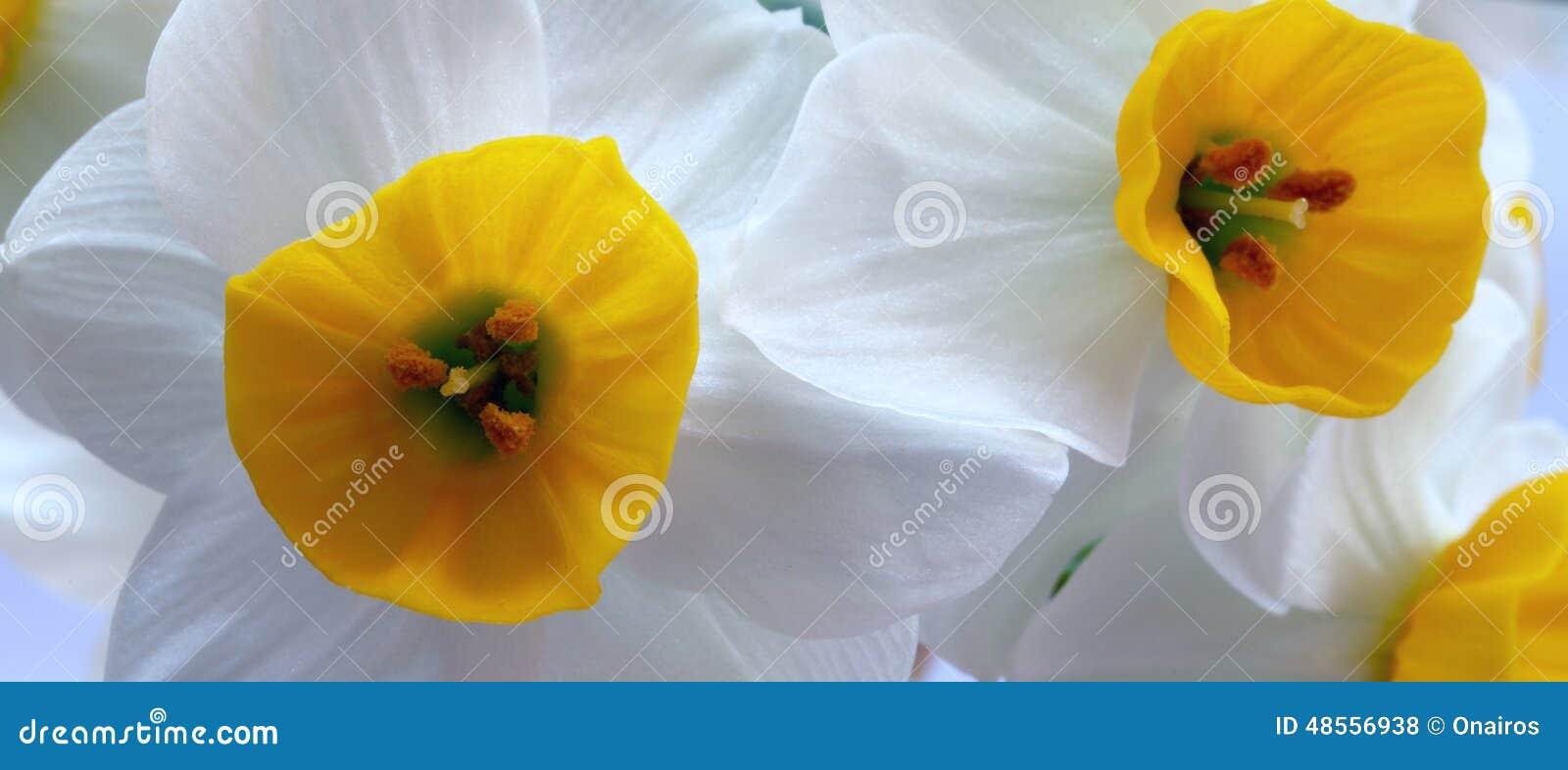Fiori bianchi e gialli fotografia stock immagine di for Nomi fiori bianchi e gialli