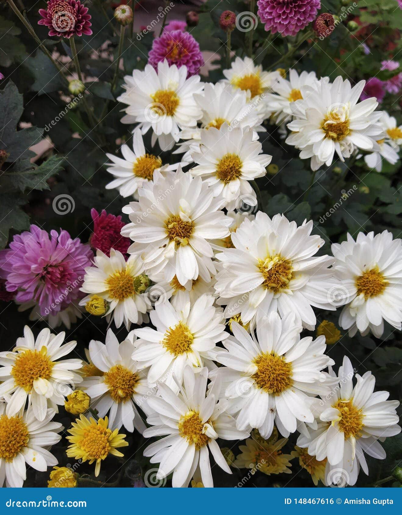 Fiori bianchi in mazzo