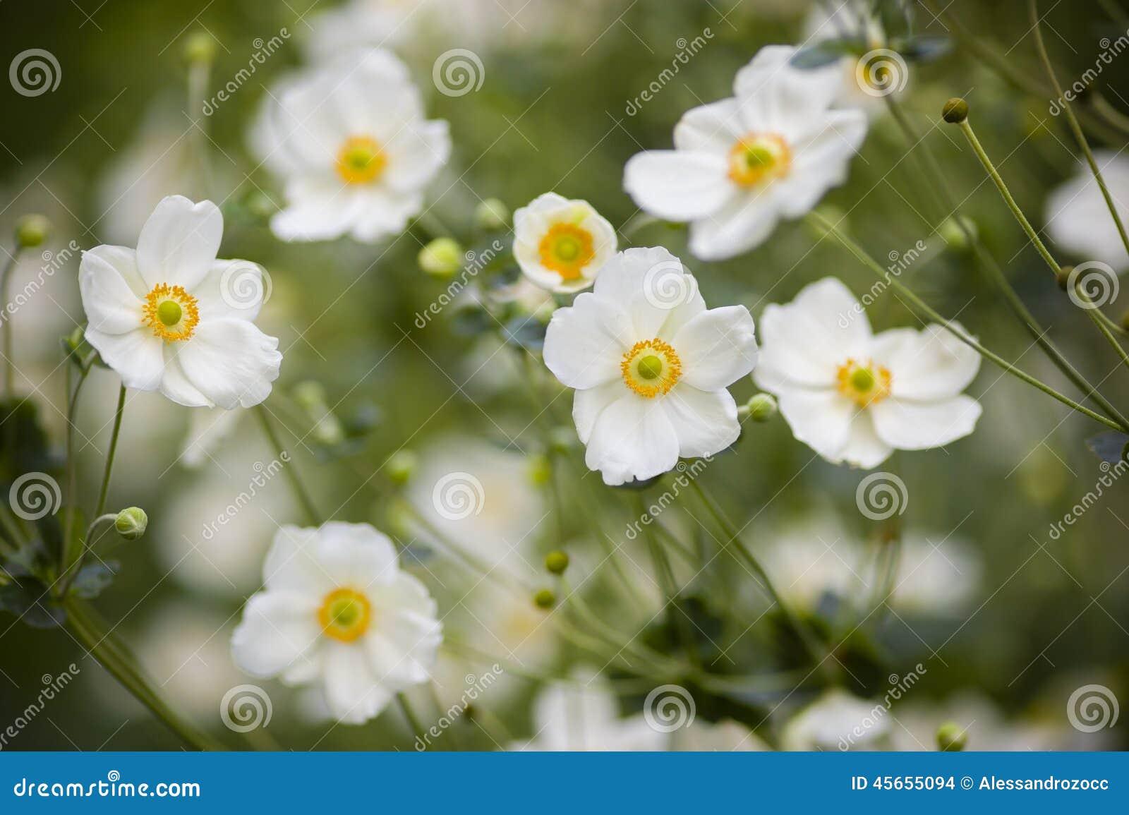 elenco nomi fiori bianchi