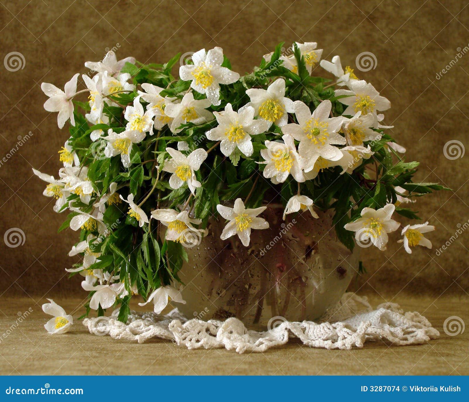 Fiori Bianchi In Vaso.Fiori Bianchi In Vaso Fotografia Stock Immagine Di Curva 3287074