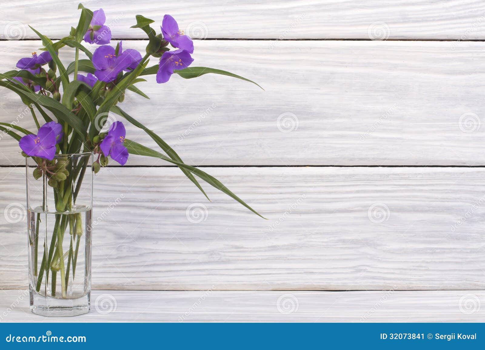 Fiori blu della miseria in un vetro immagine stock for Pianta della miseria