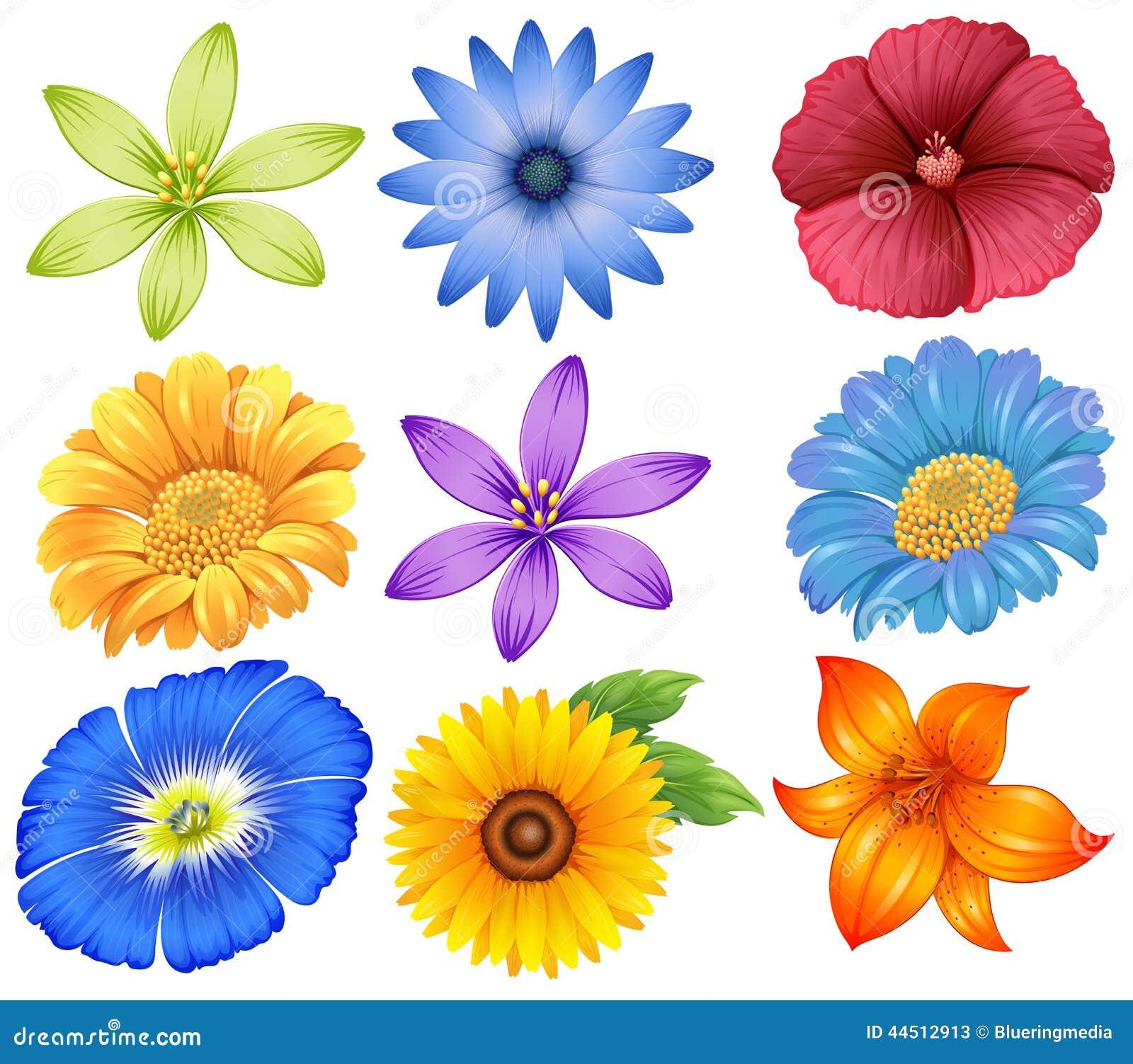 Fiori Colourful