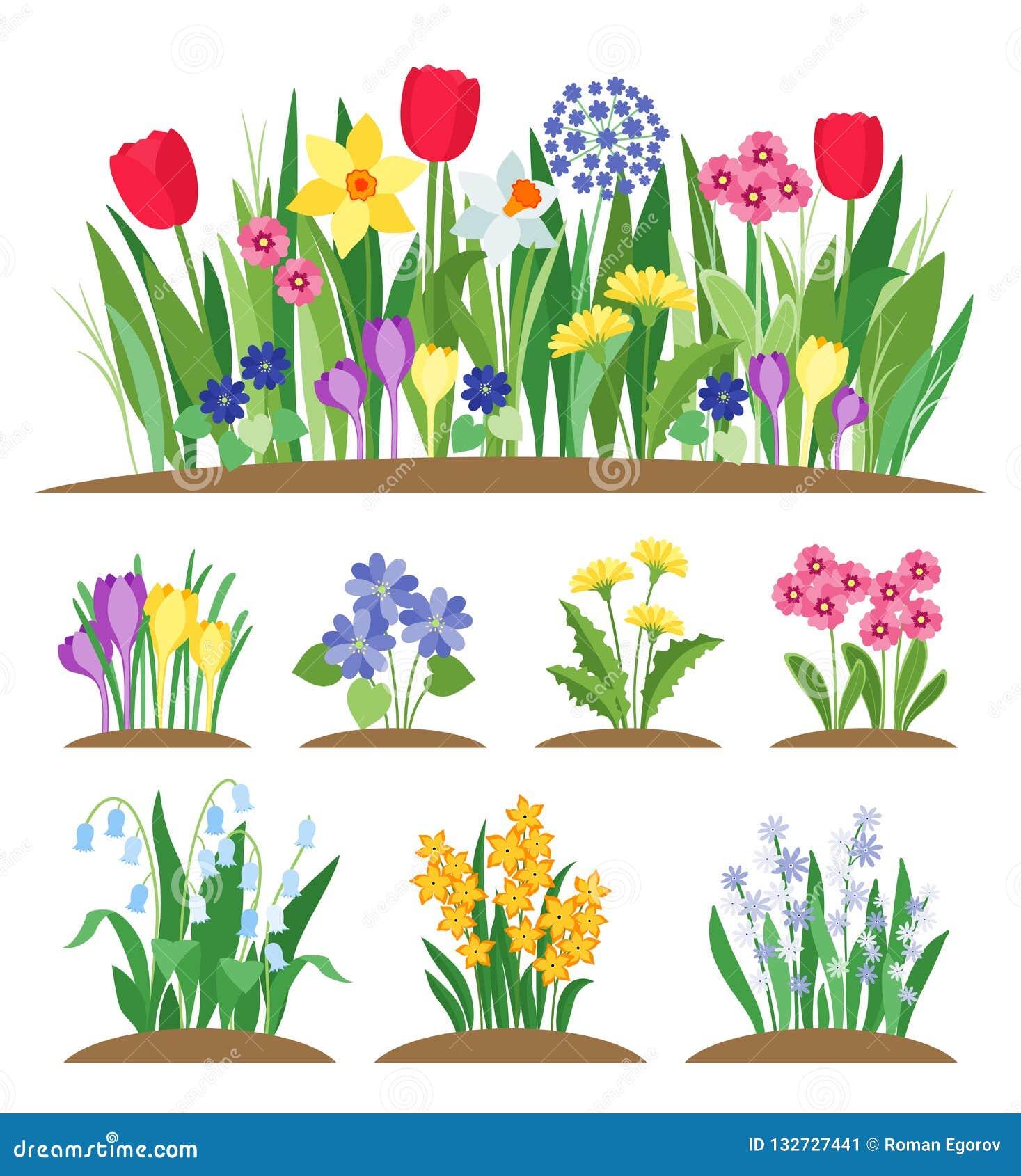 Fiori del giardino della primavera Erba e pianta Vettore di fioritura della molla in anticipo