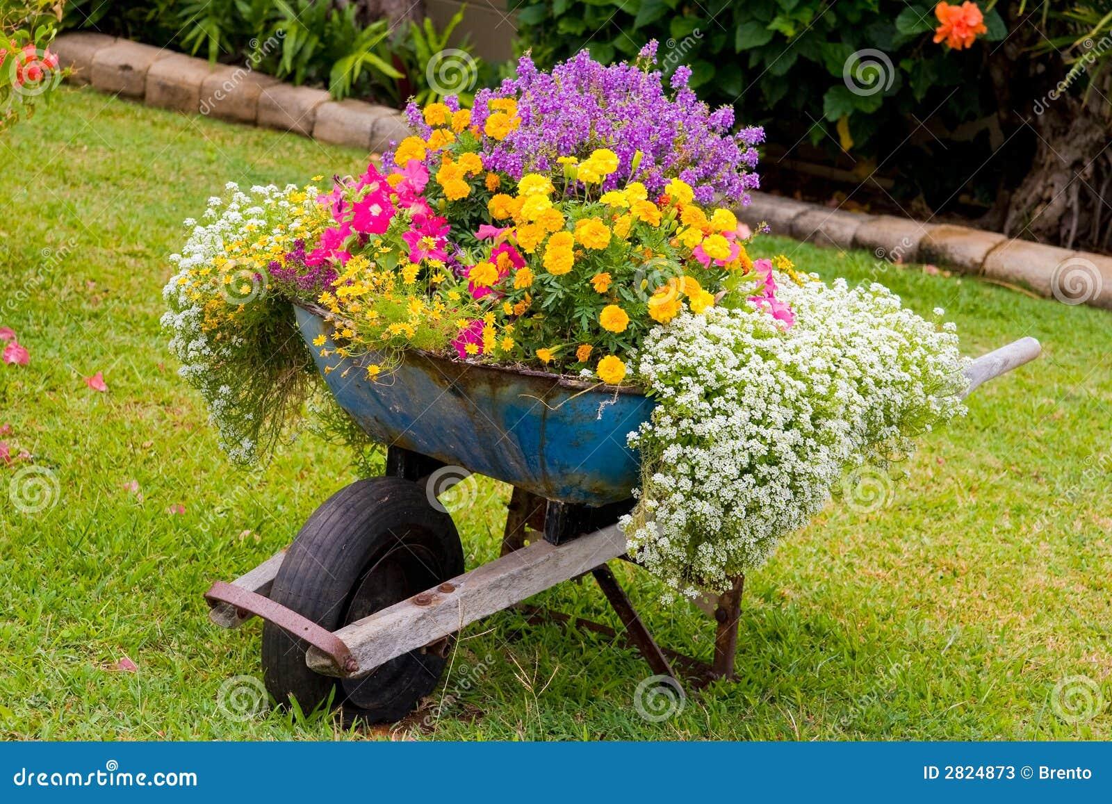 Fiori della carriola fotografie stock immagine 2824873 - Grossi fiori da giardino ...
