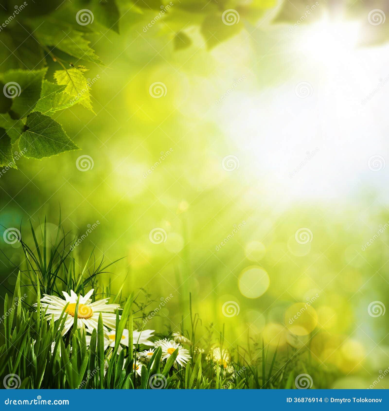 Download Fiori Della Margherita Sul Prato Fotografia Stock - Immagine di colorful, prato: 36876914