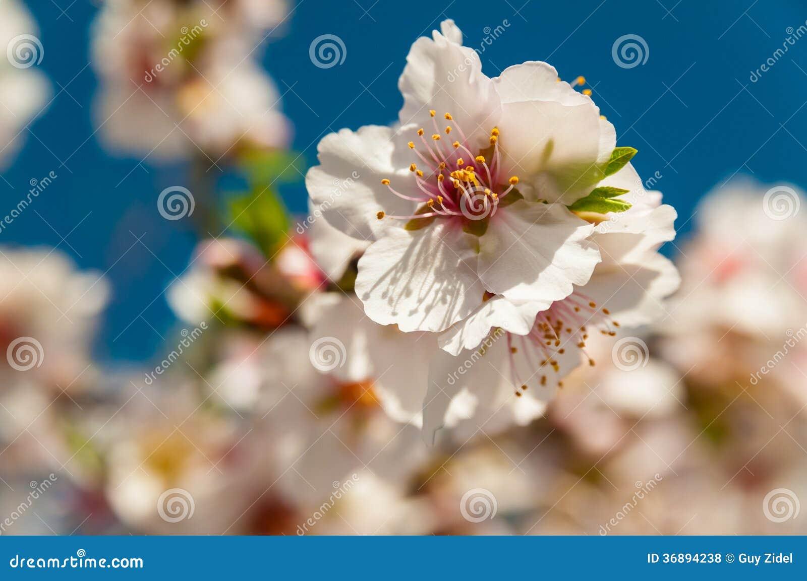 Download Fiori della primavera fotografia stock. Immagine di miele - 36894238