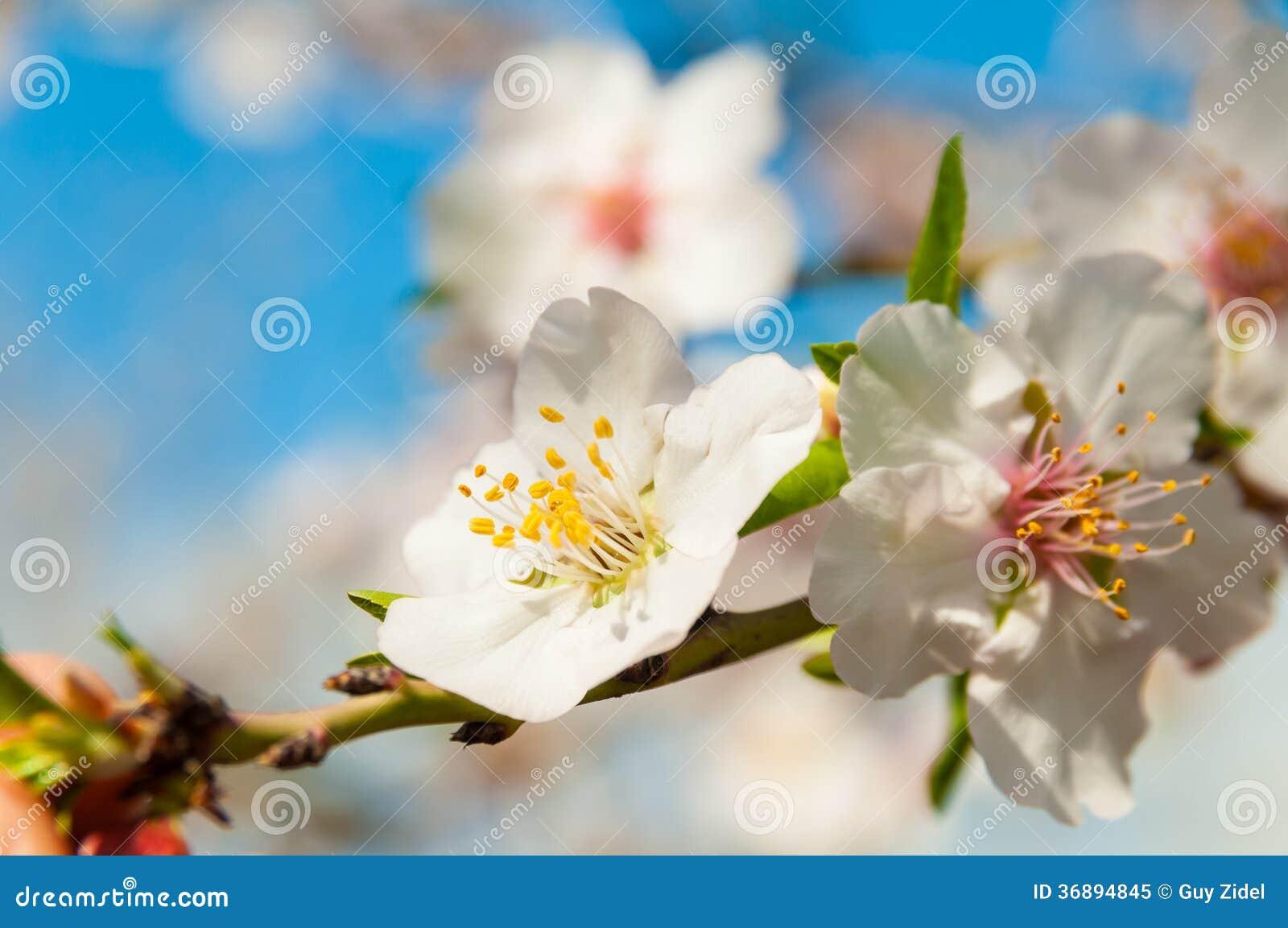 Download Fiori della primavera immagine stock. Immagine di fiore - 36894845