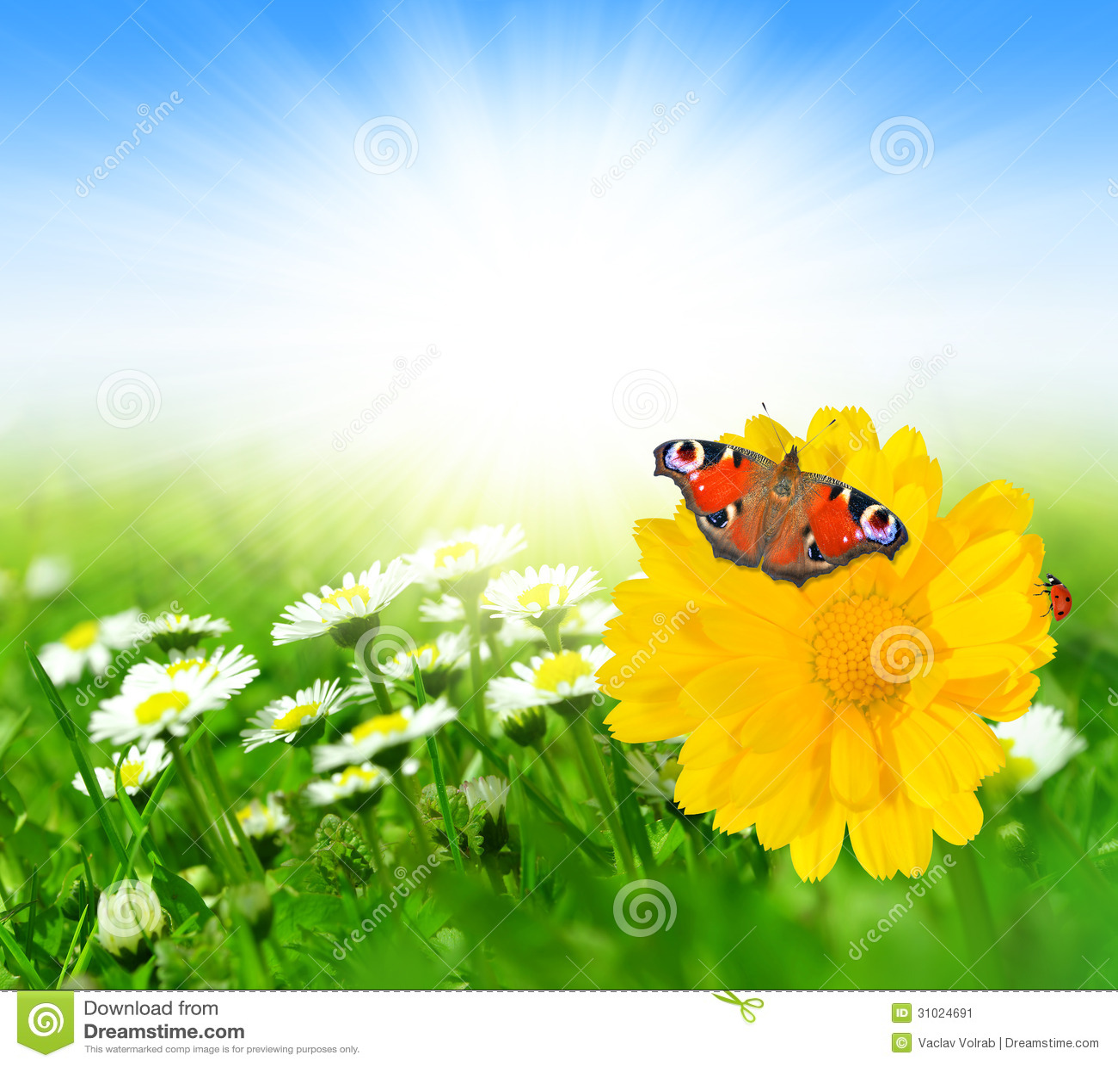 Fiori della primavera con la farfalla immagine stock for Fiori con la l