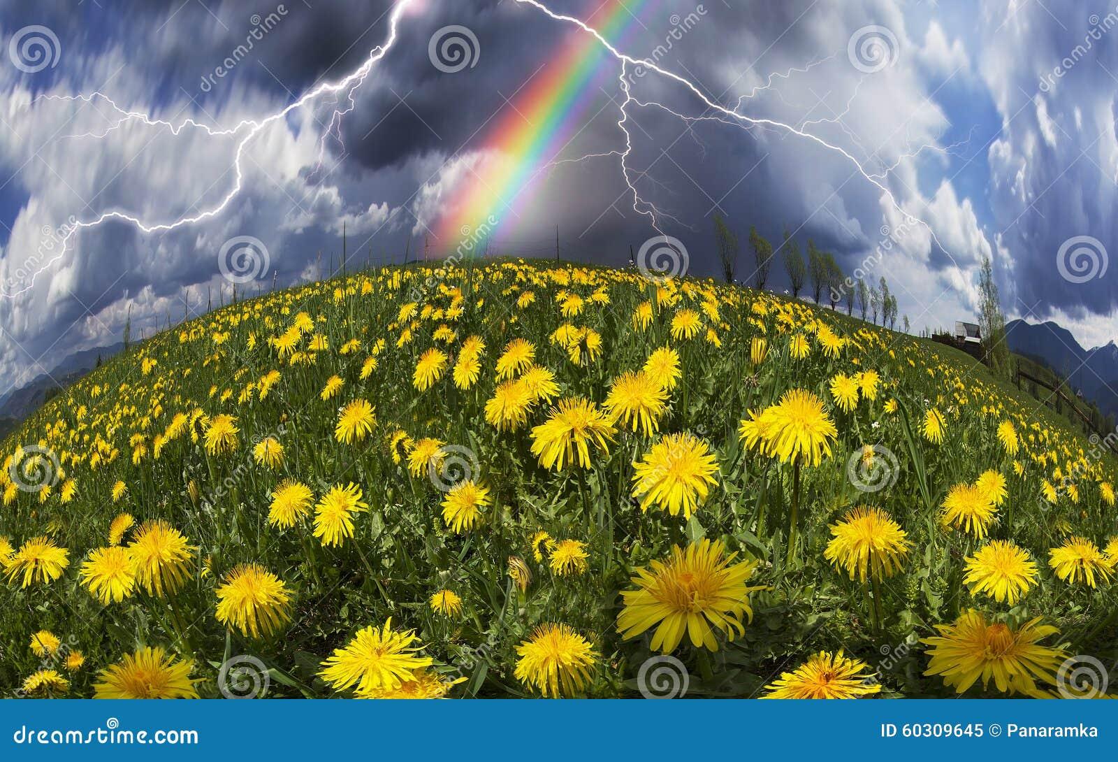 Fiori della primavera e di estate della radura immagine - Fiori da giardino primavera estate ...