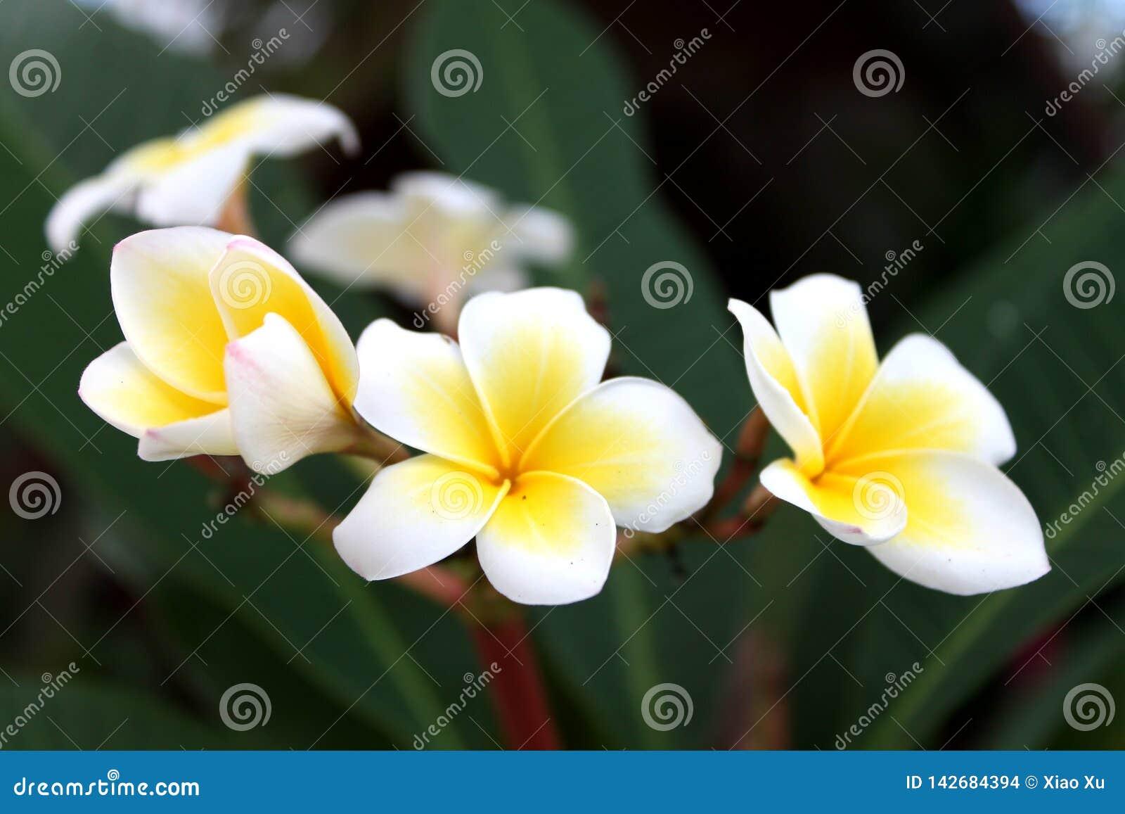 Fiori della primavera