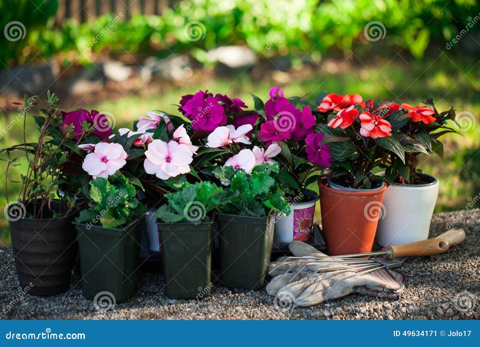 Fiori del giardino pronti per piantare