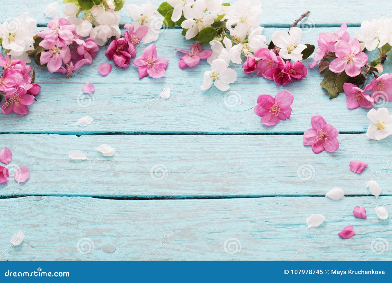 Fiori Della Primavera Su Fondo Di Legno Blu Immagine Stock