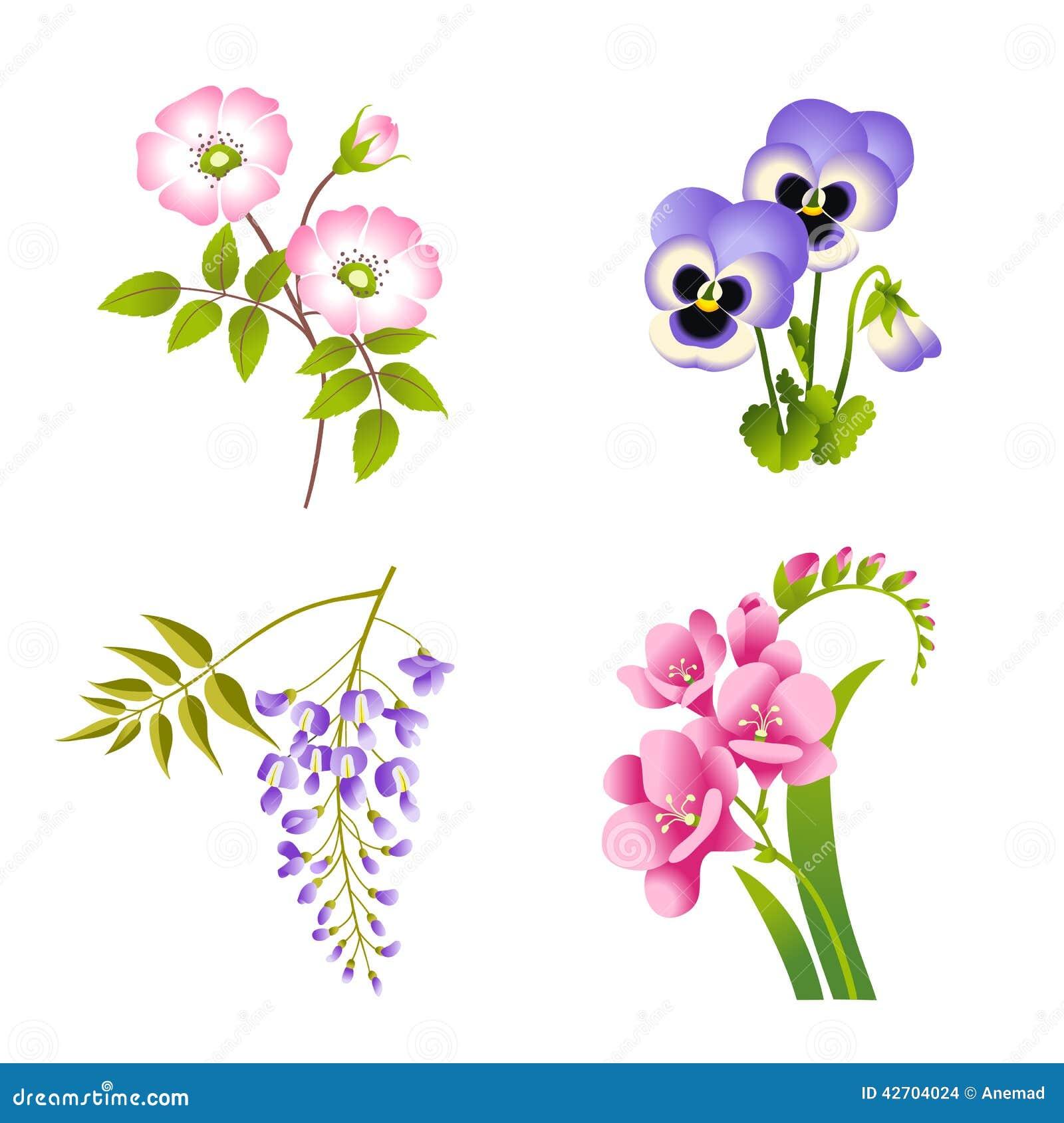 Fiori delle rose della pans di glicine e della fucsia for Glicine disegno