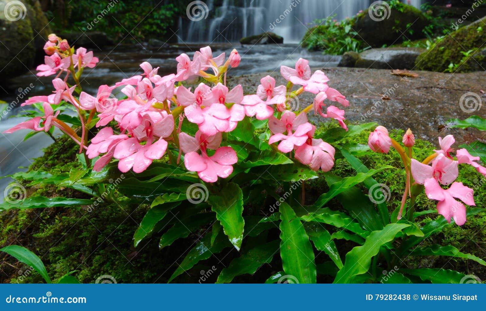 Fiori di bocca di leone e fiori rosa fotografia stock for Bocca di leone in vaso