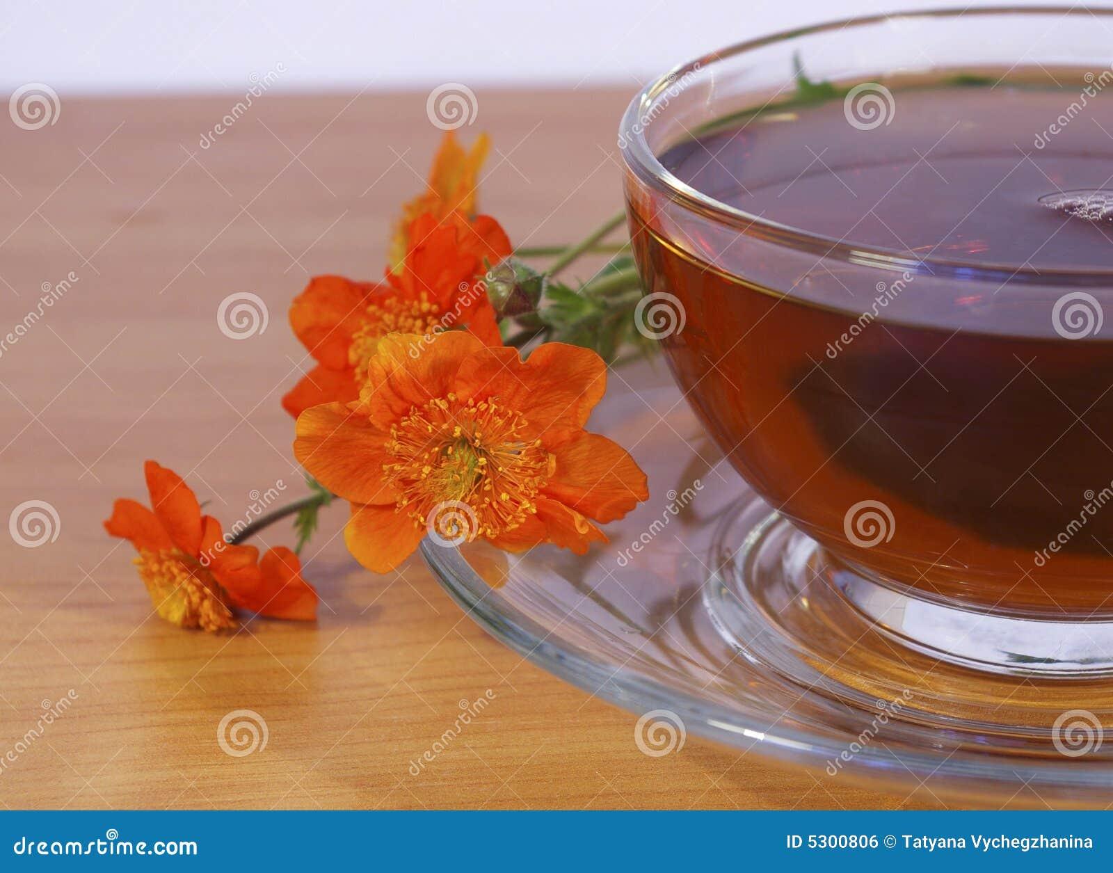 Download Fiori Di Colore Rosso E Del Tè Fotografia Stock - Immagine di liquido, pianta: 5300806