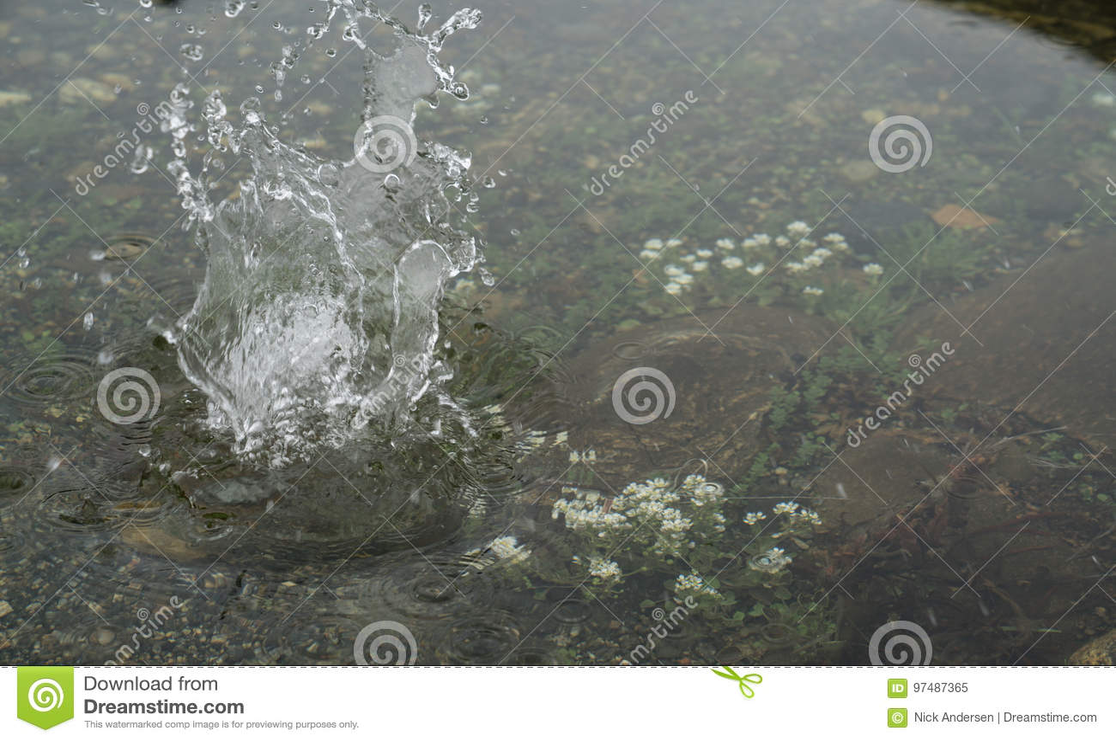 Fiori di estate in acqua