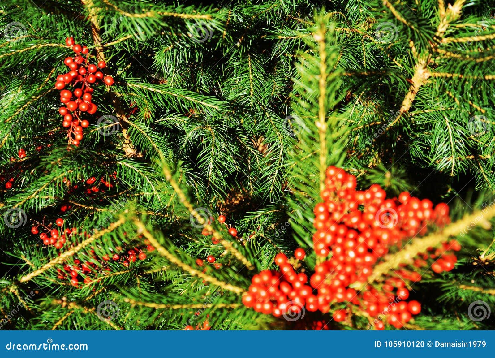 Fiori Di Rosso Arancio Di Inverno E Foglie Verdi Verdi Sfondo