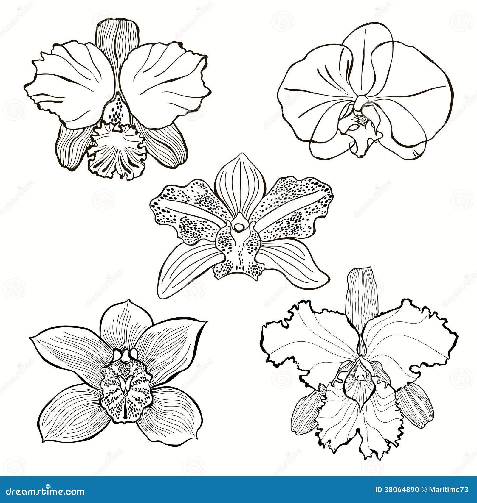 Fiori disegnati a mano dell 39 orchidea messi fotografia for Fiori disegnati