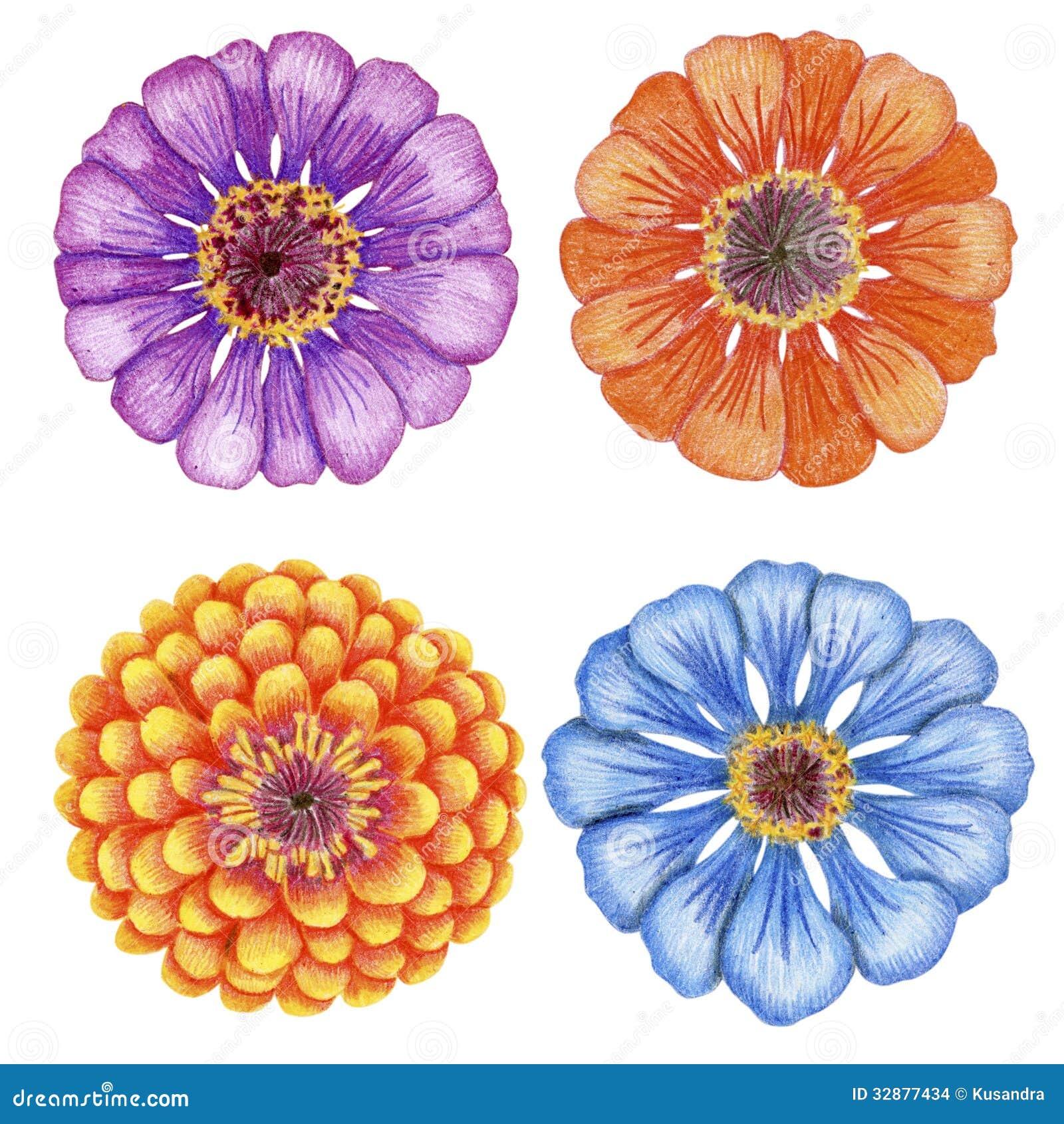 fiori disegnati a mano di zinnia immagini stock immagine ForFiori Disegnati