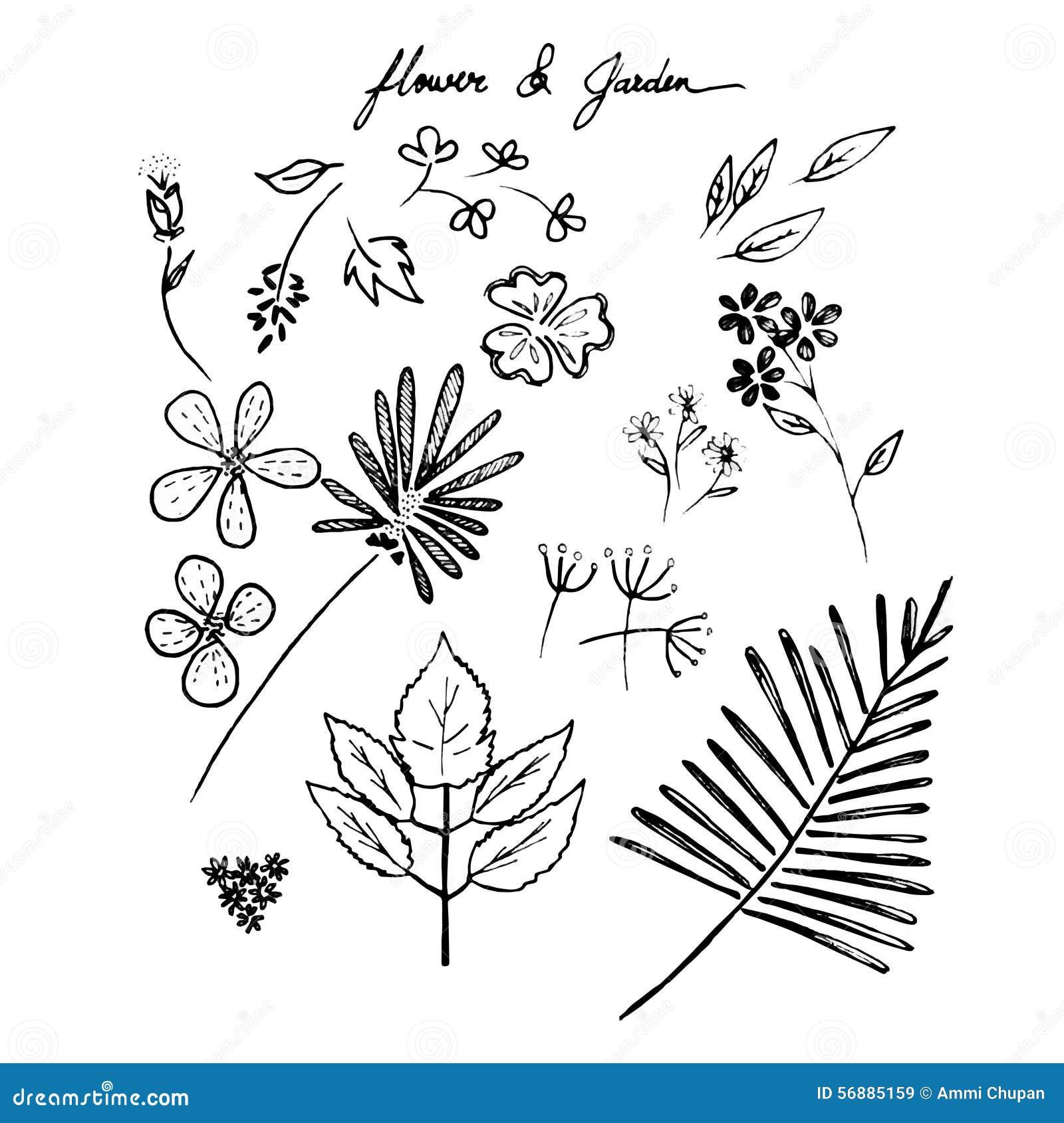 Fiori e giardini disegnati a mano