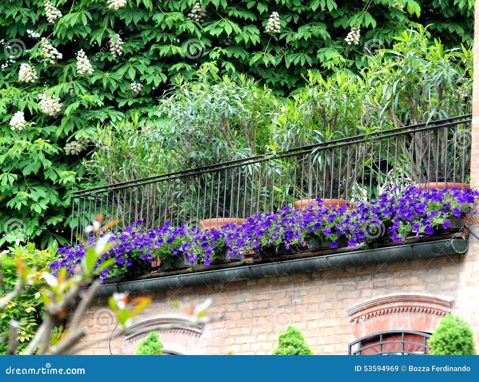 Fiori e pianta di una casa immagine stock immagine di for Pianta di una casa