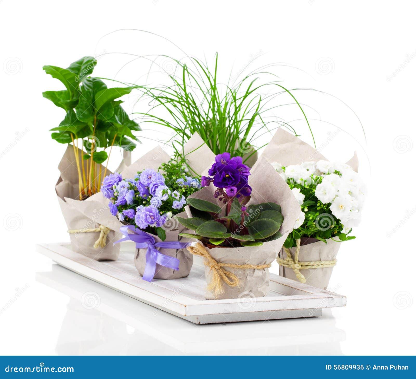 Fiori e piante della primavera fotografia stock immagine for Piante fiori