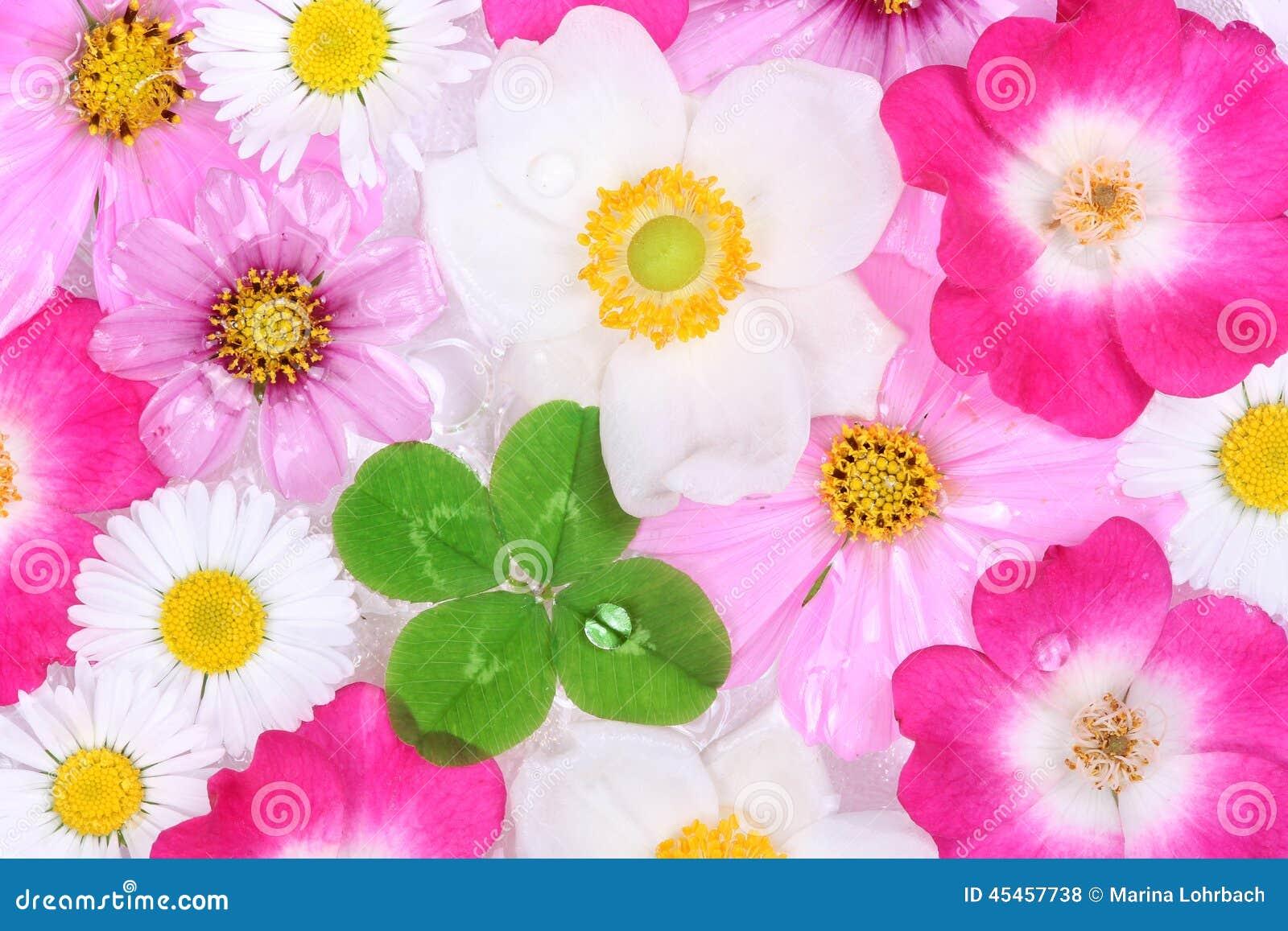 Fiori Quadrifoglio.Fiori E Quadrifoglio Fotografia Stock Immagine Di Fiore 45457738