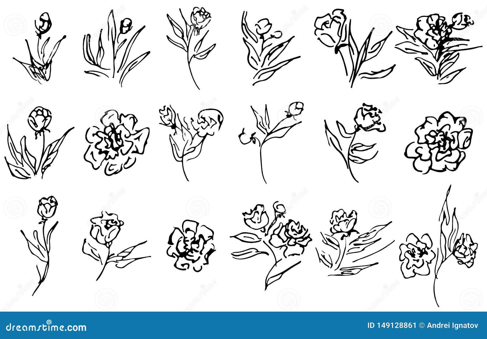 Fiori e raccolta disegnata a mano dei rami isolata su fondo bianco 18 elementi grafici floreali grande insieme di vettore profilo