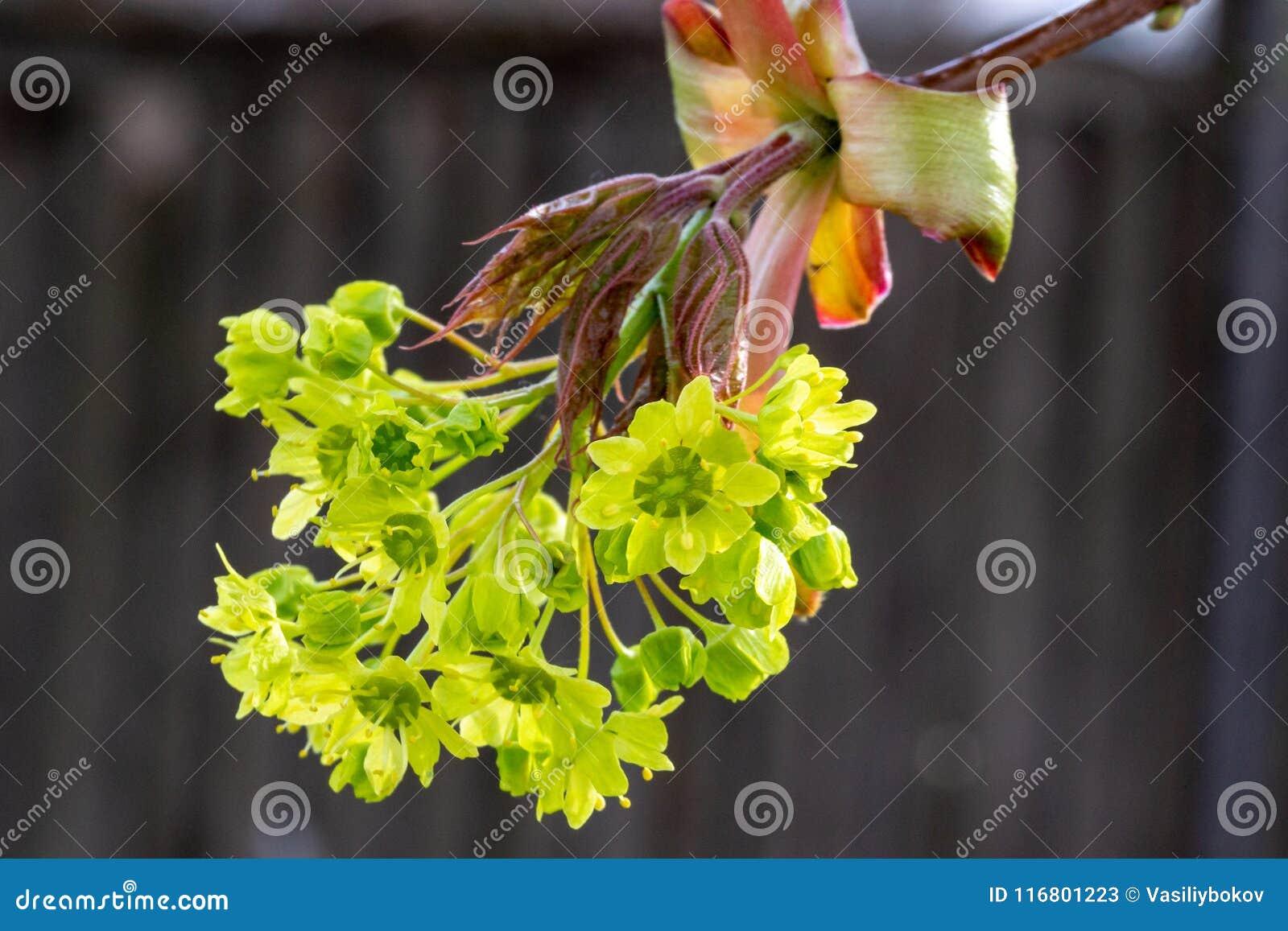 Fiori ed ovaie dei semi