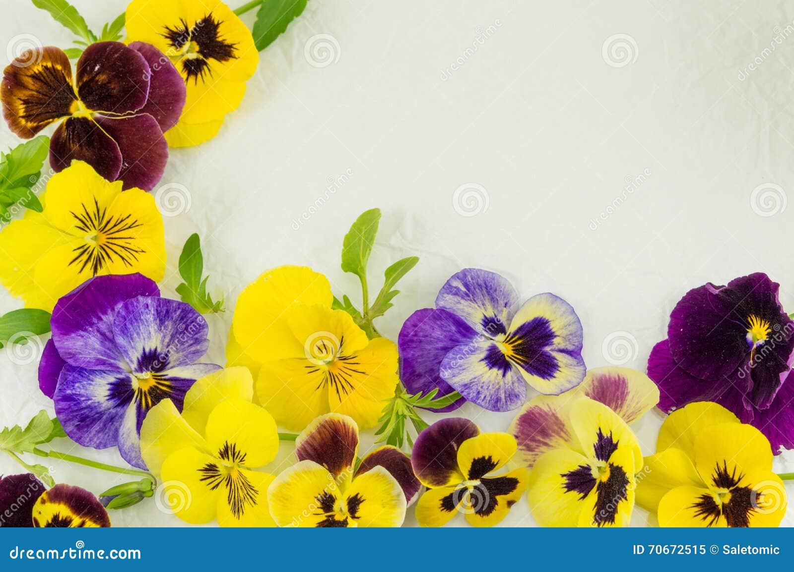 Fiori Viola Gialli.Fiori Gialli E Viola Immagine Stock Immagine Di Fiore 70672515