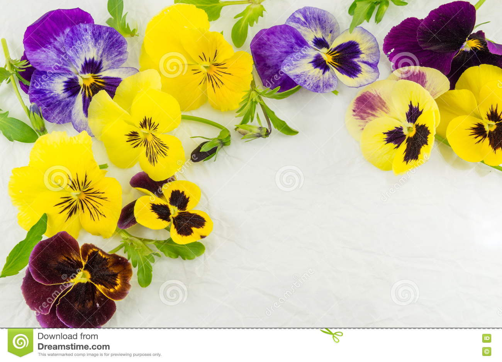 Fiori Viola Gialli.Fiori Gialli E Viola Immagine Stock Immagine Di Viola 73406799